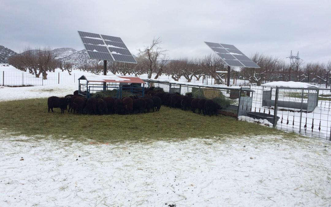 Solar Sheep