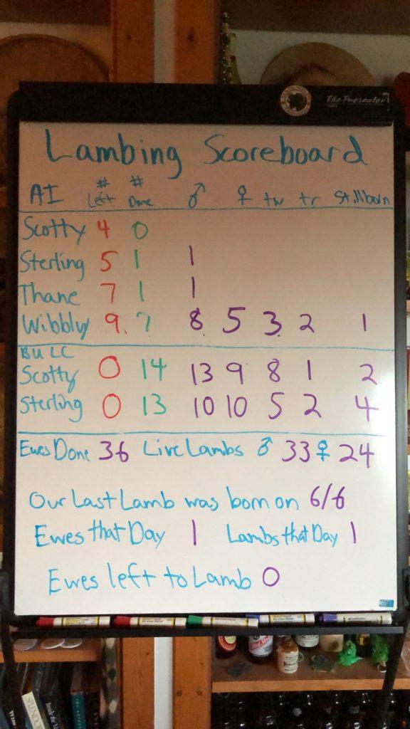Lambing Scoreboard